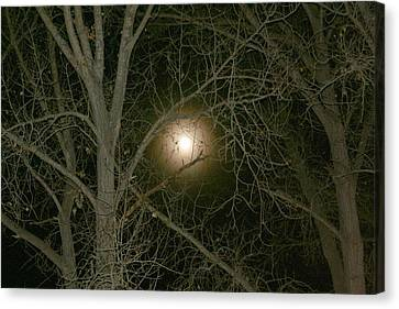 Canvas Print featuring the photograph Moon Through The Trees by Laurel Talabere