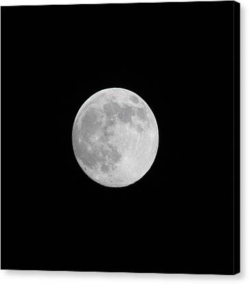 Moon Time Canvas Print by Cathie Douglas