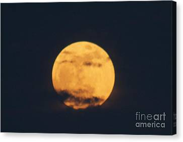Canvas Print featuring the photograph Moon by William Norton