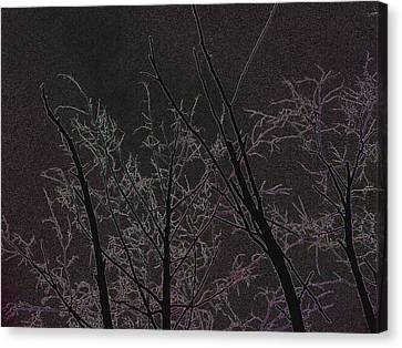 Moonlight I Canvas Print