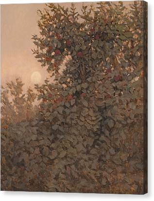 Moonrise In The Orchard Canvas Print by Peter  Campbell