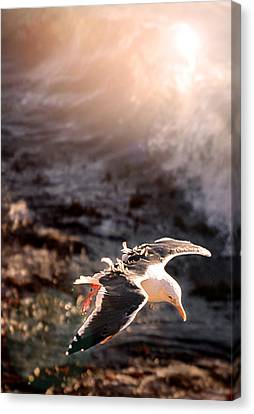 Canvas Print featuring the photograph Moonstone Beach Seagull by Michael Rock