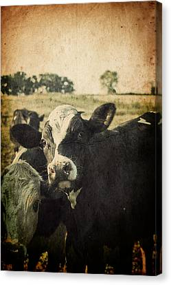Mooove Canvas Print by Joel Witmeyer
