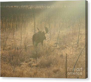 Moose On A Mission Canvas Print