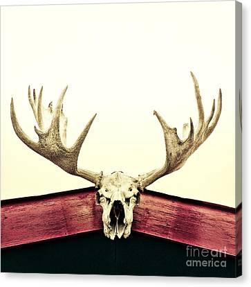 Bulls Canvas Print - Moose Trophy by Priska Wettstein