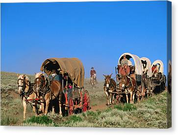 Mormons On Horse Carriages, Mormon Pioneer Wagon Train To Utah, Near South Pass, Wyoming, United States Of America, North America Canvas Print by Holger Leue