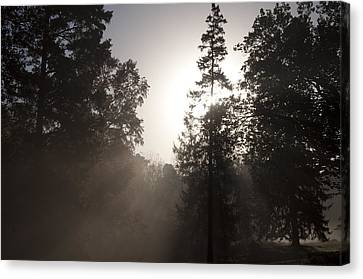 Morning At Valley Forge Canvas Print by Bill Cannon