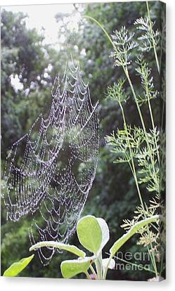 Morning Dew Canvas Print by Michelle Welles