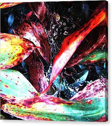 Morning Dew Canvas Print by Todd Sherlock