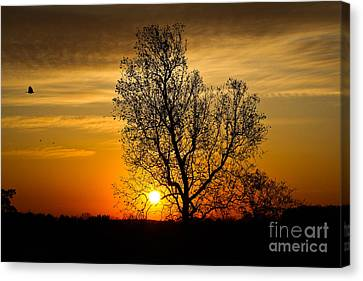 Canvas Print featuring the photograph Morning Flight by Everett Houser
