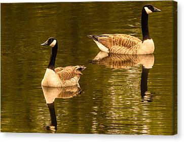 Morning Geese  Canvas Print by Ken Beatty
