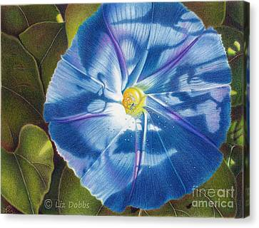 Morning Glory B Canvas Print by Elizabeth Dobbs