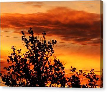 Morning In Silhouette Canvas Print by Denise Workheiser