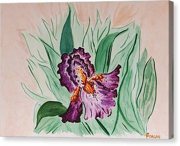 Morning Iris Canvas Print by Cynthia Morgan