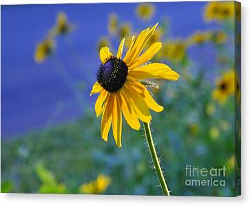Canvas Print featuring the photograph Morning Light by Nava Thompson