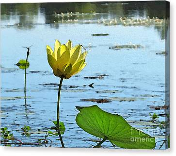 Canvas Print featuring the photograph Morning Lotus Pond by Deborah Smith