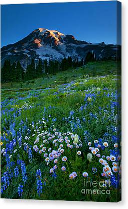 Morning Majesty Canvas Print by Mike  Dawson