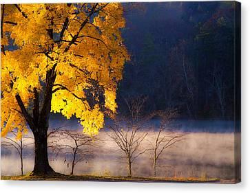 Morning Maple Ll Canvas Print