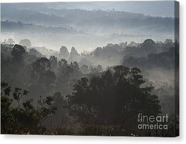Morning Mist In Panama's Highlands Canvas Print by Heiko Koehrer-Wagner