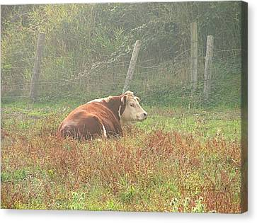 Canvas Print featuring the photograph Morning Moo by Wendy McKennon