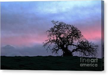 Morning Oak Canvas Print by Daniel Ryan