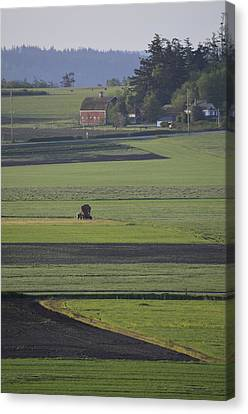 Morning On The Farm Canvas Print by Anna Bree