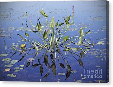 Canvas Print featuring the photograph Morning Reflection by Eunice Gibb