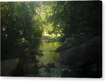 Morning River Canvas Print by Daniel Milligan