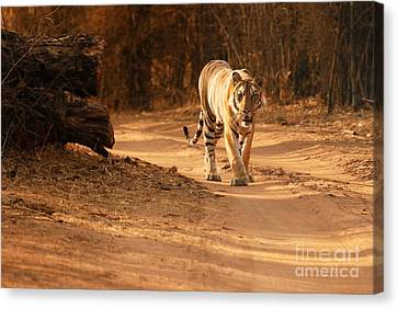 Morning Stroll Canvas Print by Fotosas Photography