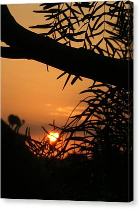 Canvas Print featuring the photograph Morning Sun And Mesquite by Louis Nugent