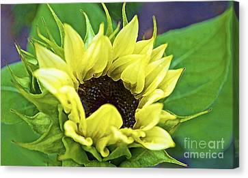 Digital Sunflower Canvas Print - Morning Sunshine by Gwyn Newcombe