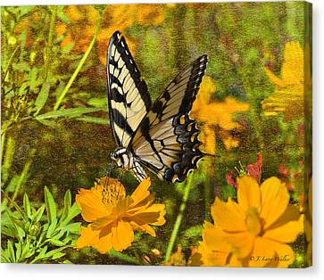 Morning Tiger Swallowtail Canvas Print by J Larry Walker