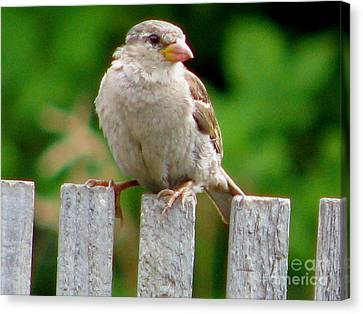 Morning Visitor Canvas Print by Rory Sagner