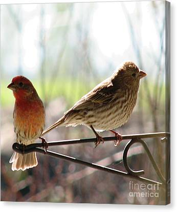 Canvas Print featuring the photograph Morning Visitors 2 by Rory Sagner