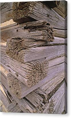 Morticed Joints On An Abandonded Log Canvas Print by Gordon Wiltsie