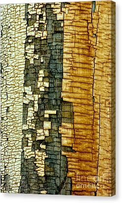 Mosaic Of Time Canvas Print by Vicki Pelham
