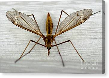 Mosquito Hawk Canvas Print by The Kepharts