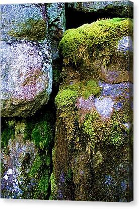 Moss On Rocks Canvas Print by Bridget Johnson