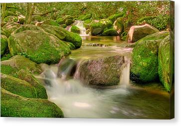 Canvas Print featuring the photograph Mossy Beauty by Cindy Haggerty