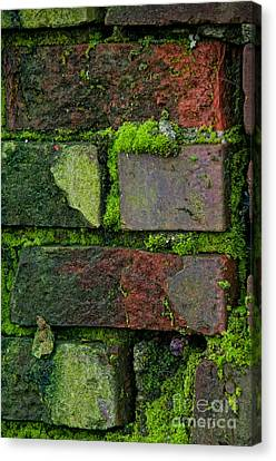 Mossy Brick Wall Canvas Print by Carol Ailles