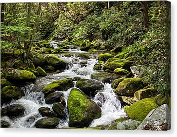 Mossy Creek Canvas Print by Ronald Lutz