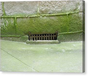 Canvas Print featuring the photograph Mossy Grate by Christophe Ennis