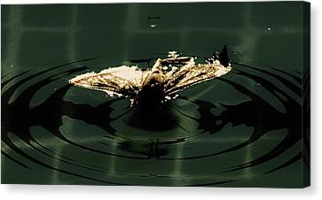 Canvas Print featuring the photograph Moth Ripples by Jessica Shelton