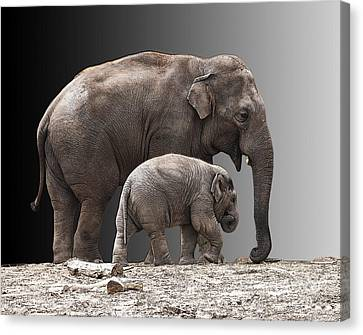 Mother And Baby Canvas Print by Sheila Laurens