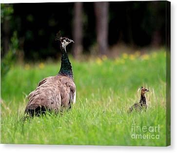 Mothersday Canvas Print - Mother And Child . Peacocks . 40d9016 by Wingsdomain Art and Photography