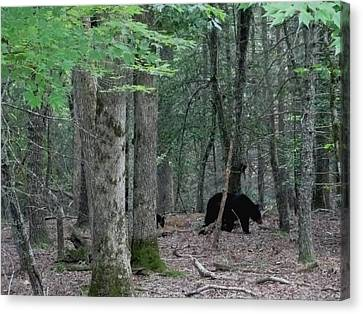 Mother Bear And Cub In Woods Canvas Print