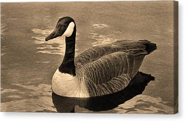 Mother Goose Canvas Print by Sergio Aguayo