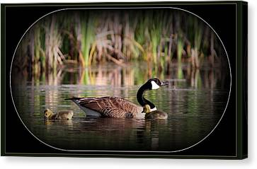 Mother Goose Canvas Print by Travis Truelove