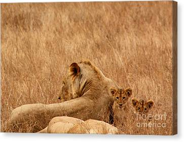 Mother Lion With Family Canvas Print
