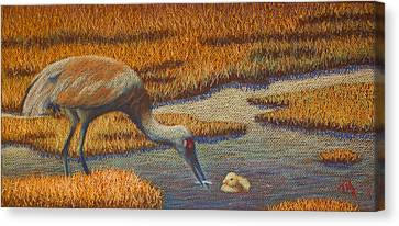 Mother Sandhill Crane Canvas Print by Thomas Maynard